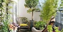 Balkon Inspiration | Hauptstadt Garten / Auch auf Balkon und Terrasse kann man Blumen, Obst und Gemüse oder sogar kleine Bäume pflanzen. Auf dieser Pinnwand finden sich Ideen, Inspiration und DIY für einen schönen und kreativen Balkon, von bunt verspielt bis Bohostyle.