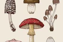 Vintage Pflanzen Illustrationen I Hauptstadt Garten / Illus und Zeichnungen im Retro, Midcentury und Vintage Style