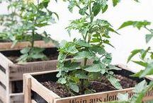 Kistenglück I Hauptstadt Garten / Kisten kann man bepflanzen, stapeln, bemalen, etc. Mann kann sie als Regale, Tische und Mini Hochbeete nutzen. Hier findest Du Inpirationen und DIY Ideen