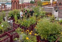 Urban Gardening | Gruppenboard / Trends und Ideen zum City Gardening auf kleinem Raum oder in Gemeinschaftsgärten. Gärtnern mit Hochbeeten, Obstkisten, Bäckerkisten, Reissäcken und Big Bags.