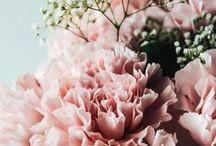 Blumenliebe | Hauptstadt Garten / Alles dreht sich hier um Blumen: Rosen, Tulpen, Nelken, Lilien, Allium, Sonnenblumen, Akelei, Artischocken, Freesien, Gladiolen,...