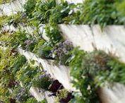 Smart Gardening I Hauptstadt Garten / Inspiration und Anleitungen zu Aquaponik und Aquaponic, Hydropinic und Hydroponic, Digitatlisierung, Rasenmäher, Mähroboter, automatische Bewässerung, etc.