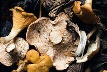 Pilze [Hauptstadt Garten] / Hier dreht sich alles um Pfifferlinge, Morcheln, Steinpilze, Maronen, Braunkappen, etc. Es gibt Ideen und Tipps zum Pilze Sammeln, Rezepte mit Pilzen und Inspiration für Pillzzucht zuhause oder im Garten.