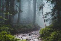 Wald | Hauptstadt Garten