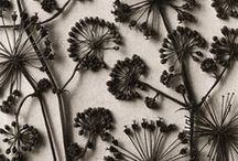 Trockenblumen [Hauptstadt Garten]