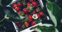 Erdbeeren / Hier dreht sich alle um Erdbeeren. Egal ob Erdbeermarmelade, Erdbeerkuchen, Erdebeereis, Erdbeersmoothie oder andere Dessert aus Erdbeeren. Hier findest Du das passende Rezept, DIY und Inspiration. Aber auch Tipps zu Anbau und Pflege von Erdbeeren. Ich zeige Dir, wie Du ein Erdbeeren Beet anlegen und mulchen kannst und welches die besten Erdbeersorten für Deinen Garten oder Balkon sind.