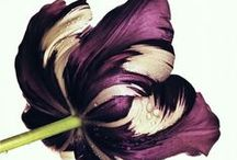 Flora. / by Stephanie Hensley