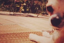 Pablo / Pablo. Dear companion 2000-2012. Smartest small dog I have ever met.