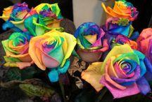 Rainbow stuff / by Sara Cornelison