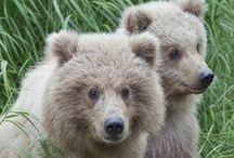 Bears - Monarchs of the Wilderness / Bears / by Linda Boag Moores