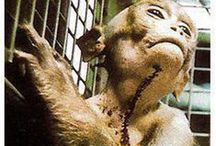 Unscrupulous, Unconscionable TESTING of Animals / I abhor vivisection. It should at least be curbed. Better, it should be abolished. I know of no achievement through vivisection, no scientific discovery, that could not have been obtained without such barbarism and cruelty. The whole thing is evil. – Charles Mayo, founder of the Mayo Clinic / by Linda Boag Moores