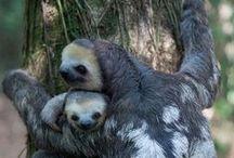 Oh Baby / Animal babies / by Linda Boag Moores