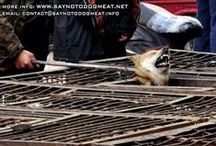Soullessness of Dog and Cat Food Markets / I wonder at times if I'm a masochist to endure looking at such horrendous acts of abuse.  I guess I'm hoping that if enough people look at these despicable acts that they'll use their voices to make others aware. / by Linda Boag Moores