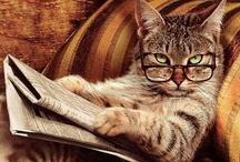 Feline Frenzy / by Ali Raetz