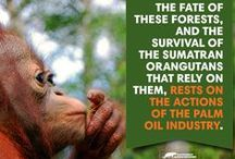STOP!!!! The price of Palm Oil / by Linda Boag Moores
