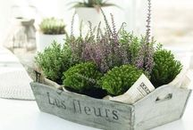 House Plants / Plants will add natural beauty and purify the air.