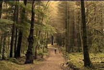 Woods / Trees / by Fernando Mora