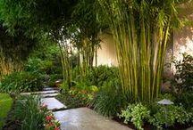 Home / Gardenlife / Holiday in the garden.