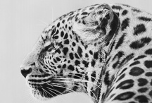 Fauna / by Fernando Mora