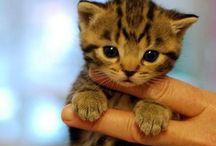 Puppies & Kitties