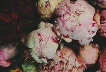 Floral - Inspiration