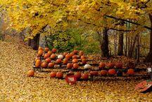 Fall / by Kelsey Miyake