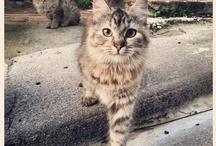 Lovecats / by Fernando Mora