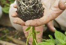 gardening ideas / by Julie Monk