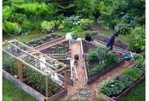 Home / Gardenlife / Backyard / Farm in the garden. Or something like a farm. Or at least 11 chicken, 7 rabbit, 3 cow.