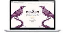 Web Design+