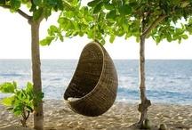 Habitat* sit, rest, alight, PERCH