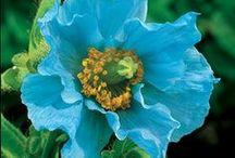 rythym of the BLUES / by Shelley Tantau