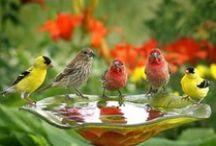 Garden ideas & inspiration / by Debbie Chapman