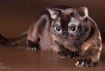 Cats / #cats #dyuminart / by Yelena Art Studio