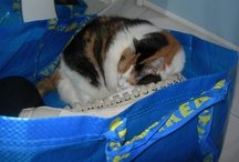 My sweet Sonia  / My lovely cat ... RIP