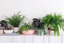 HOME: PLANTS / Nature in the home