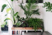 decoração com plantas / @mosartelab #mosartelab #homedecor #decoracao #plantas #tendencias #plic!  conheça nosso Blog @mlabdecor em www.mlabdecor.com.br