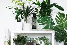 Home / You can never have too many plants in your home. I promise.
