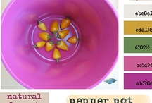 Color Palette: {Pink & Yellow}