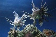 National Aquarium, Baltimore, MD