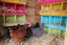 On the Farm & Raising Chickens