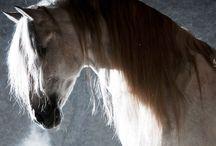 EQUESTRIAN LIFE / Horses