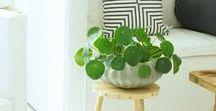 Plants / Beautiful indoor plant