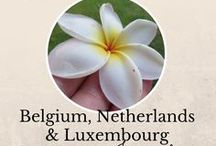 Belgium, Netherlands and Luxembourg (BENELUX) || The ultimate travel guide / Travel information about Belgium, the Netherlands and Luxembourg - travel guides, itineraries, stories, recommendations, travel tips and advice. Only vertical pins, please. Follow me and send me a DM to be added.  (Not particularly compulsory, but feel free to repin from the board each time you pin in - it makes the board and its content more successful.)