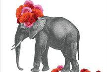 ELEPHANT / by Amber Barnett
