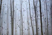 i n * t h e * w o o d s / a walk in the forest