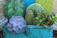 s u c c u l e n t s / and sedums and cacti