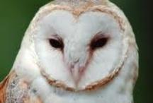 Owl Love / by jessie p