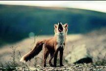 ☆  ❤  F O X Y  ❤  ☆  / ALL THINGS FOXY!