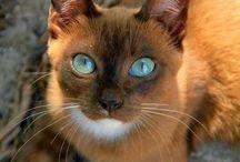 Cats 猫 / 媚びない愛すべき仲間